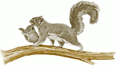 normal_squirrel_w_baby